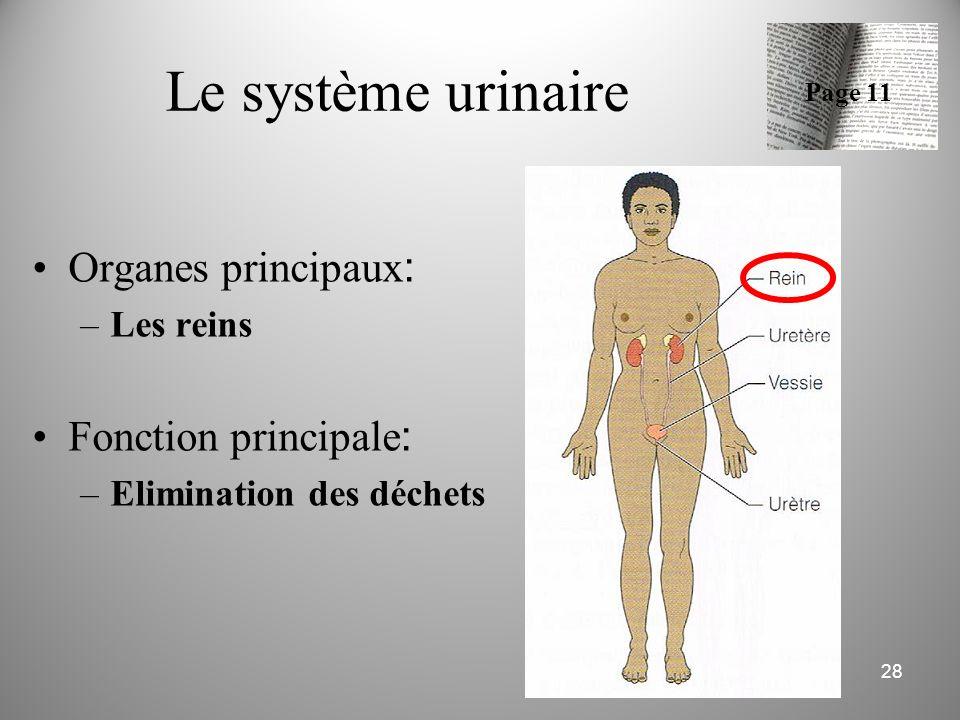 Le système urinaire Organes principaux : –Les reins Fonction principale : –Elimination des déchets 28 Page 11