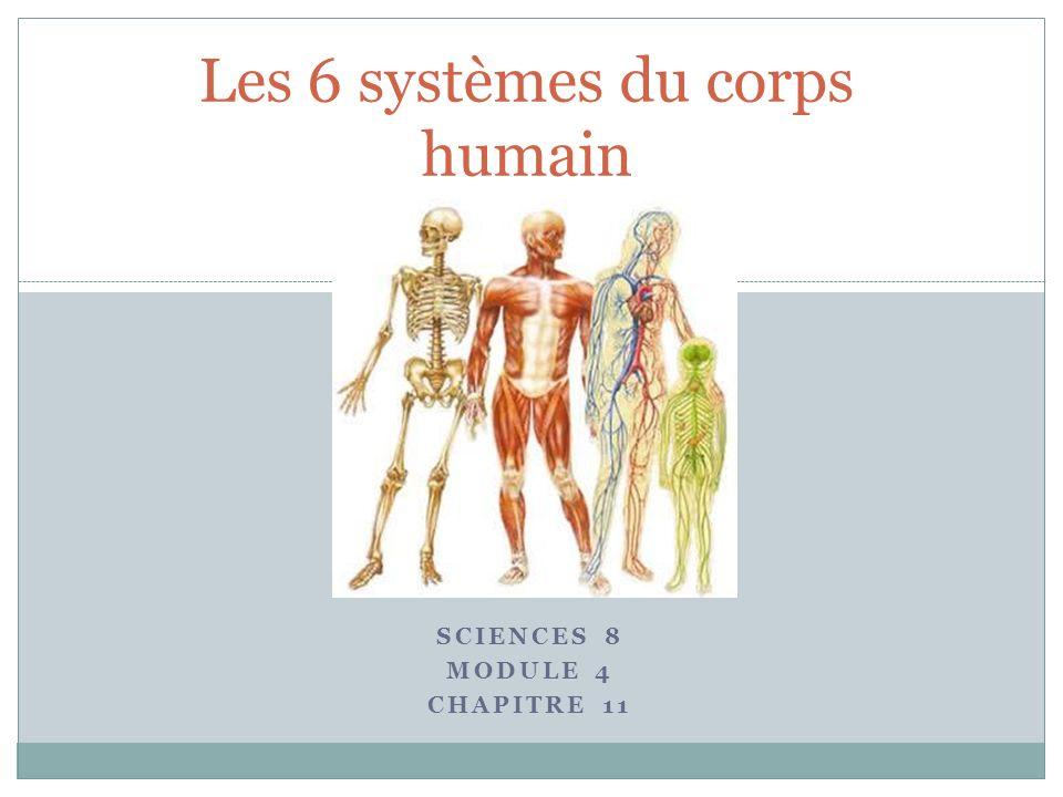SCIENCES 8 MODULE 4 CHAPITRE 11 Les 6 systèmes du corps humain