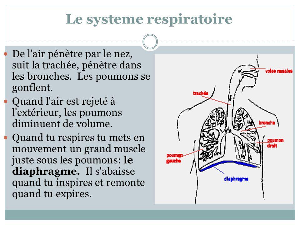 Le systeme respiratoire De l'air pénètre par le nez, suit la trachée, pénètre dans les bronches. Les poumons se gonflent. Quand l'air est rejeté à l'e