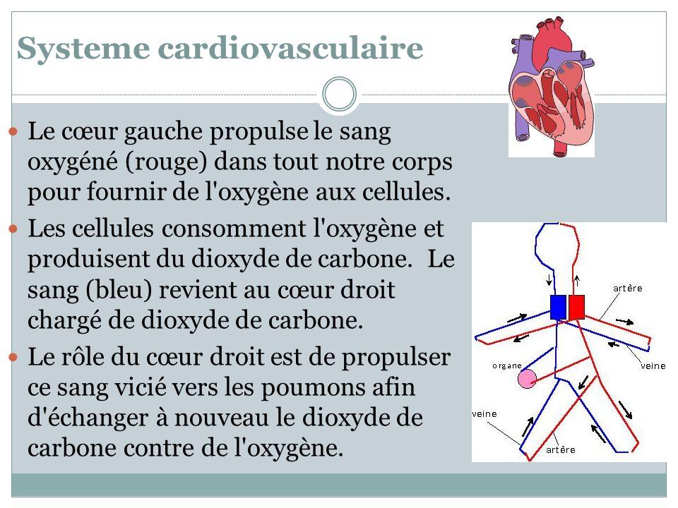 Systeme cardiovasculaire Le cœur gauche propulse le sang oxygéné (rouge) dans tout notre corps pour fournir de l'oxygène aux cellules. Les cellules co