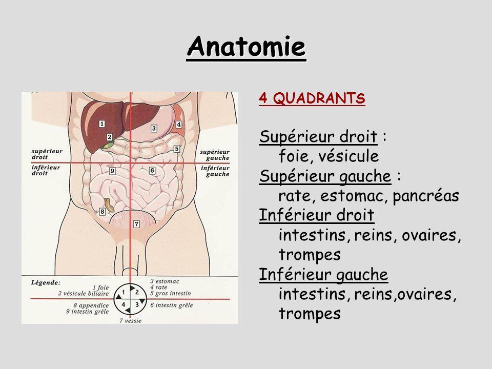 Anatomie DEUX ESPACES: Péritonéal (la vraie cavité abdominale):  contient: grêle, gros intestin, rate, foie, estomac, vésicule, reproduction femme Rétro-péritonéal: contient : reins, uretères, vessie, VCI, Ao, pancréas