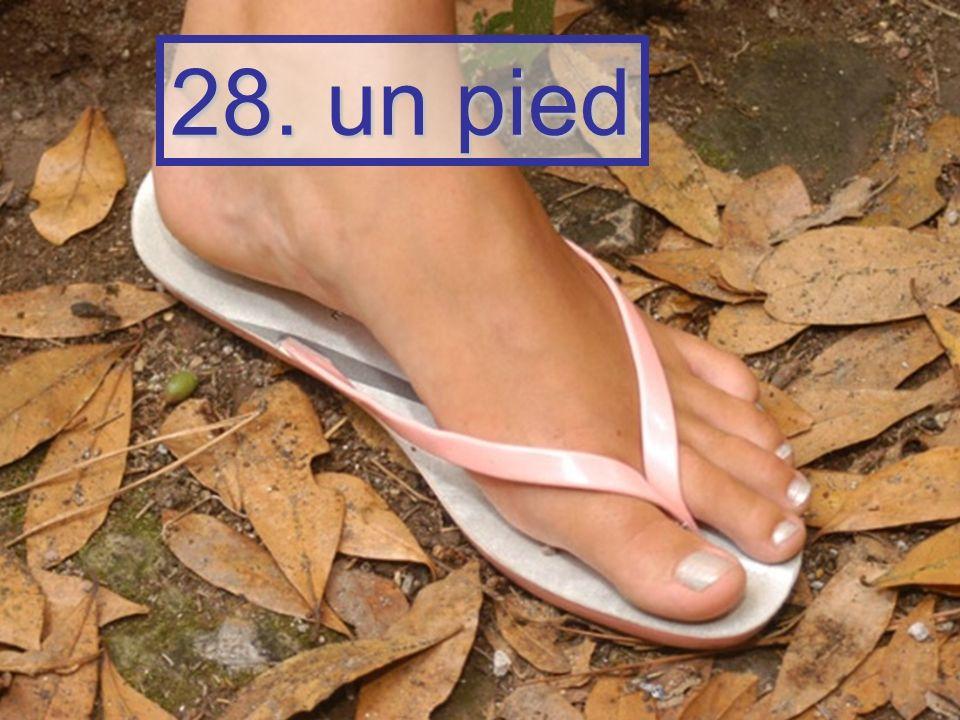 28. un pied