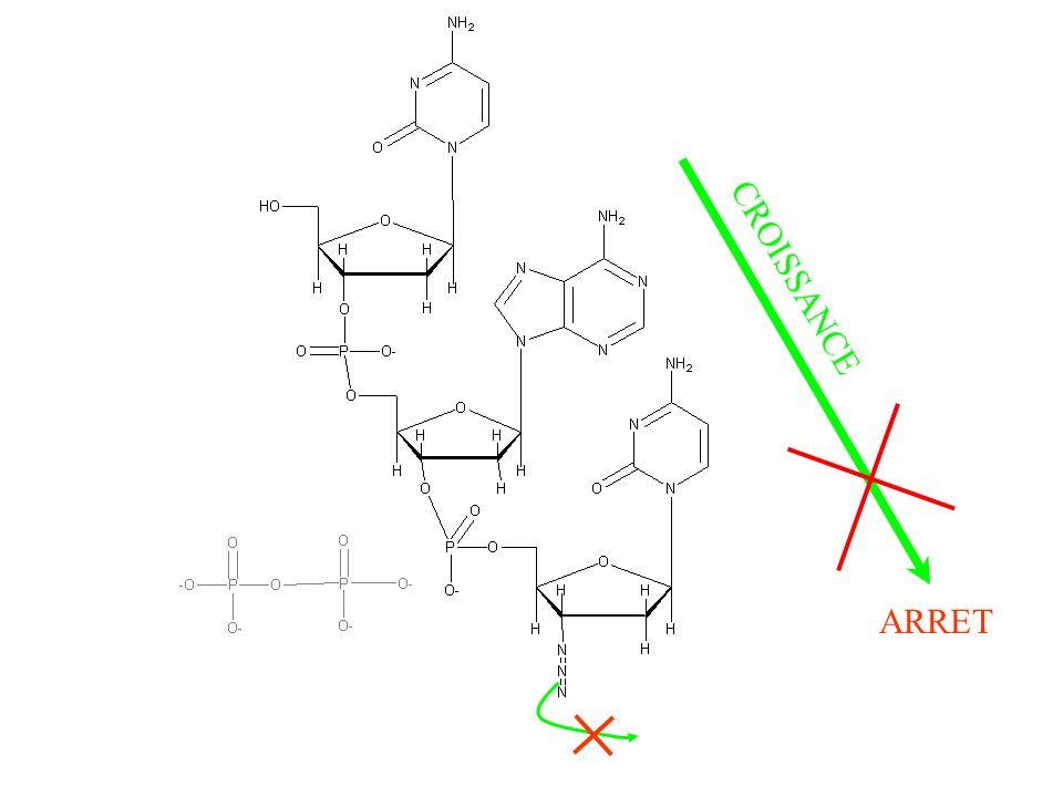 amoxicillin liquid dosage children weight