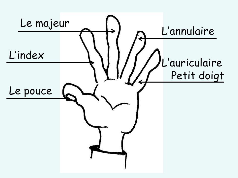 Le majeur Le pouce L'index L'auriculaire Petit doigt L'annulaire