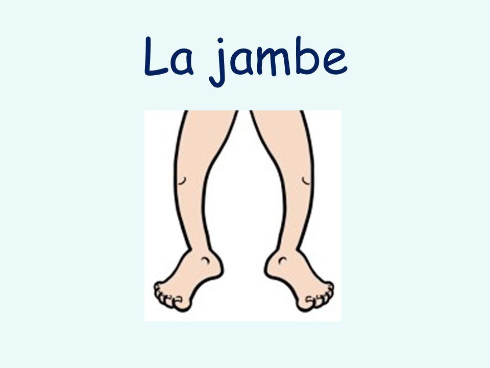 La jambe