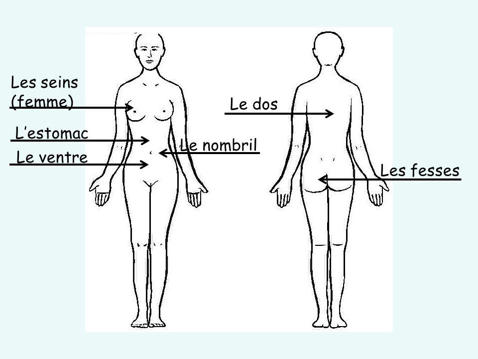 Les seins (femme) L'estomac Le ventre Le nombril Le dos Les fesses