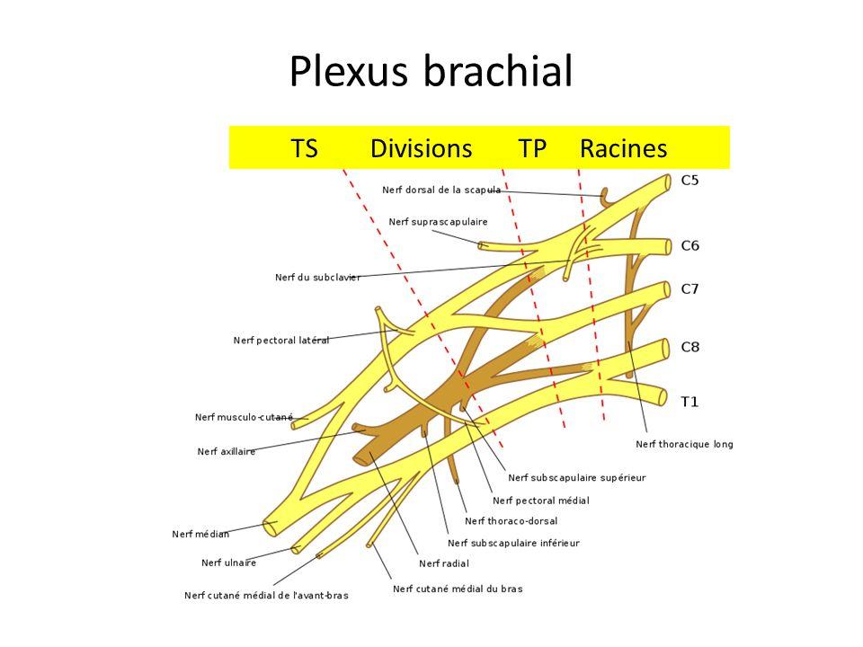 Plexus brachial TS Divisions TP Racines