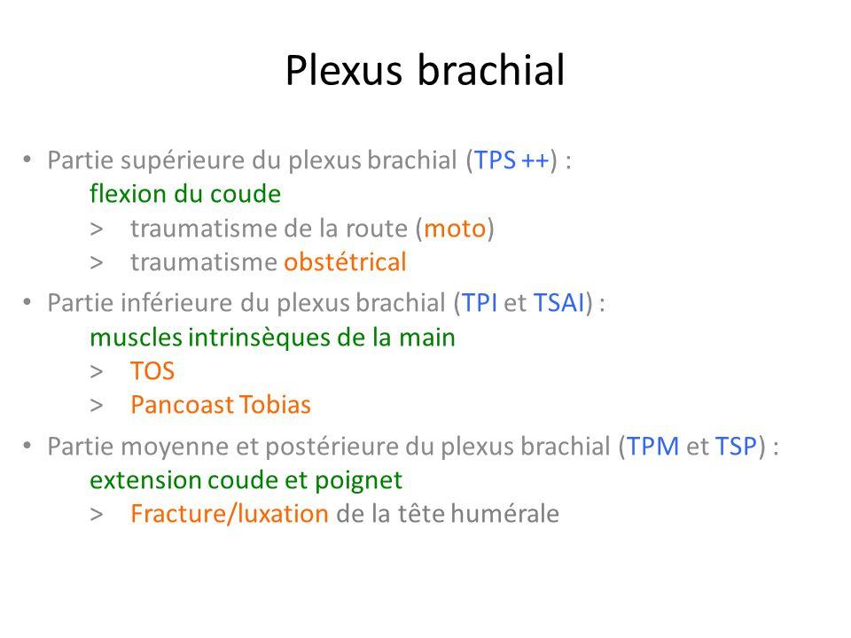 Partie supérieure du plexus brachial (TPS ++) : flexion du coude > traumatisme de la route (moto) >traumatisme obstétrical Partie inférieure du plexus brachial (TPI et TSAI) : muscles intrinsèques de la main >TOS > Pancoast Tobias Partie moyenne et postérieure du plexus brachial (TPM et TSP) : extension coude et poignet >Fracture/luxation de la tête humérale