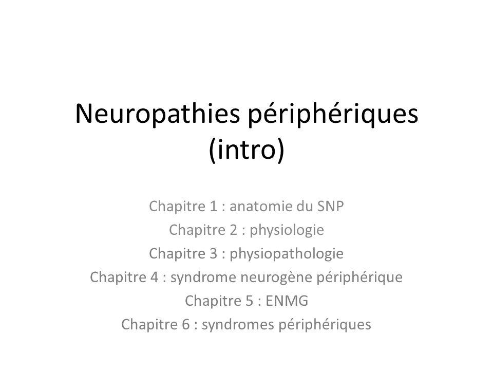 Neuropathies périphériques (intro) Chapitre 1 : anatomie du SNP Chapitre 2 : physiologie Chapitre 3 : physiopathologie Chapitre 4 : syndrome neurogène périphérique Chapitre 5 : ENMG Chapitre 6 : syndromes périphériques