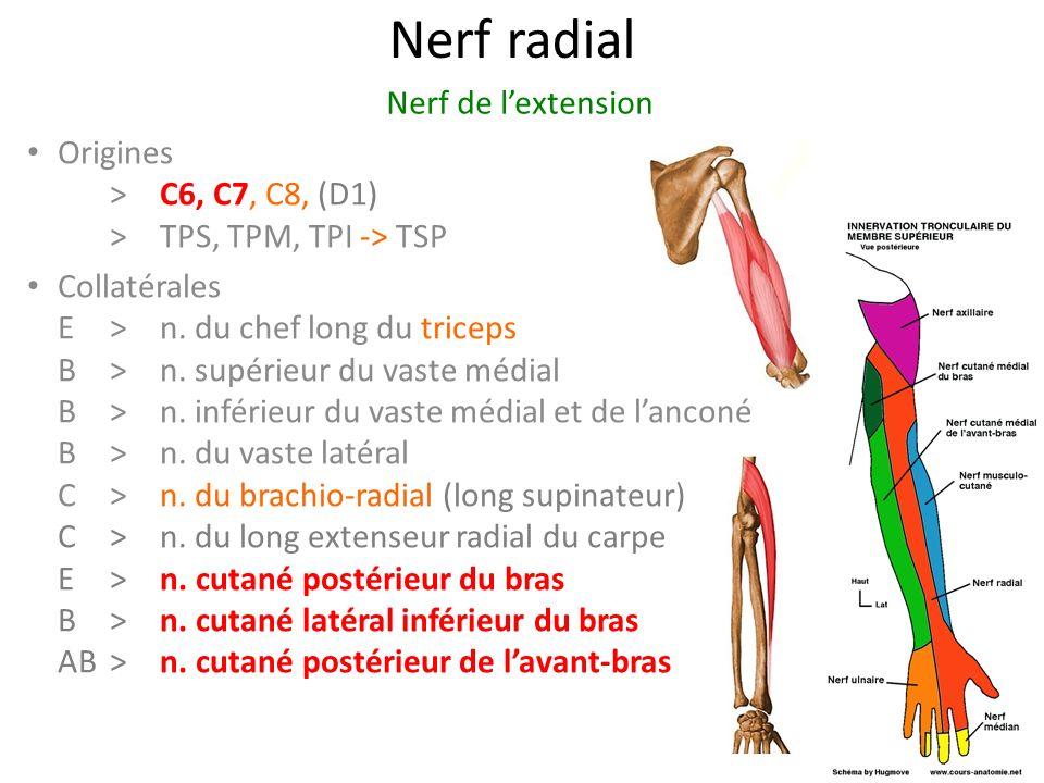Nerf radial Origines > C6, C7, C8, (D1) >TPS, TPM, TPI -> TSP Collatérales E>n.