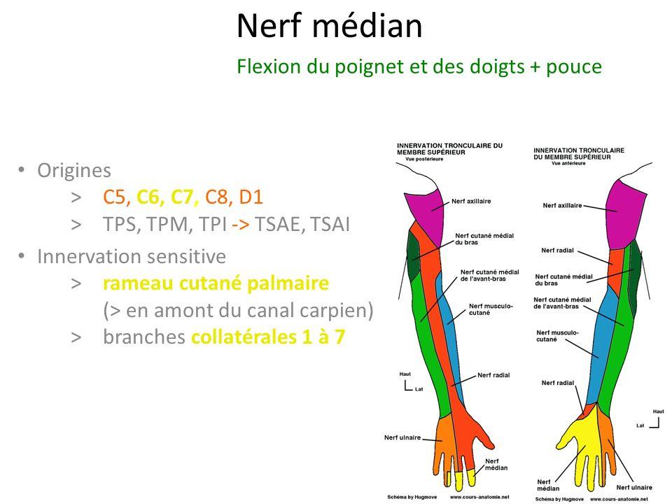 Nerf médian Origines > C5, C6, C7, C8, D1 >TPS, TPM, TPI -> TSAE, TSAI Innervation sensitive >rameau cutané palmaire (> en amont du canal carpien) > branches collatérales 1 à 7 Flexion du poignet et des doigts + pouce