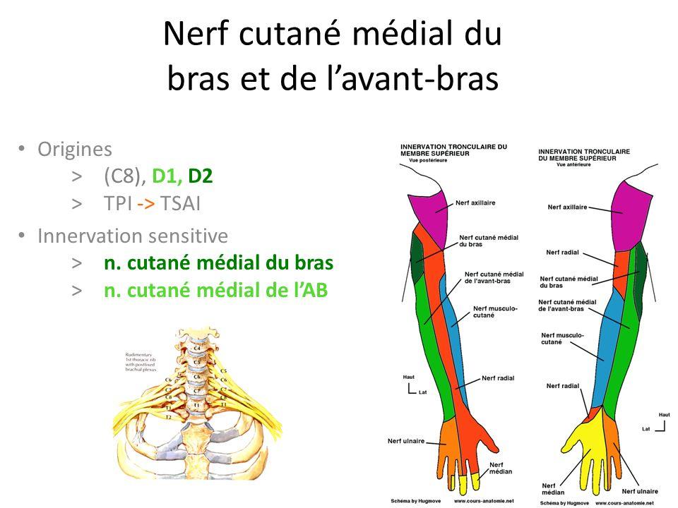 Nerf cutané médial du bras et de l'avant-bras Origines > (C8), D1, D2 >TPI -> TSAI Innervation sensitive >n.