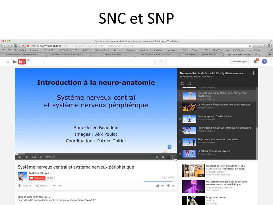 ANATOMIE MICROSCOPIQUE Chapitre 1 : anatomie du SNP