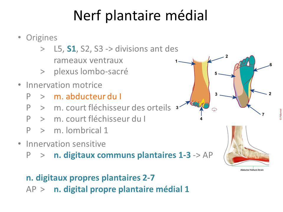 Nerf plantaire médial Origines > L5, S1, S2, S3 -> divisions ant des rameaux ventraux >plexus lombo-sacré Innervation motrice P>m.