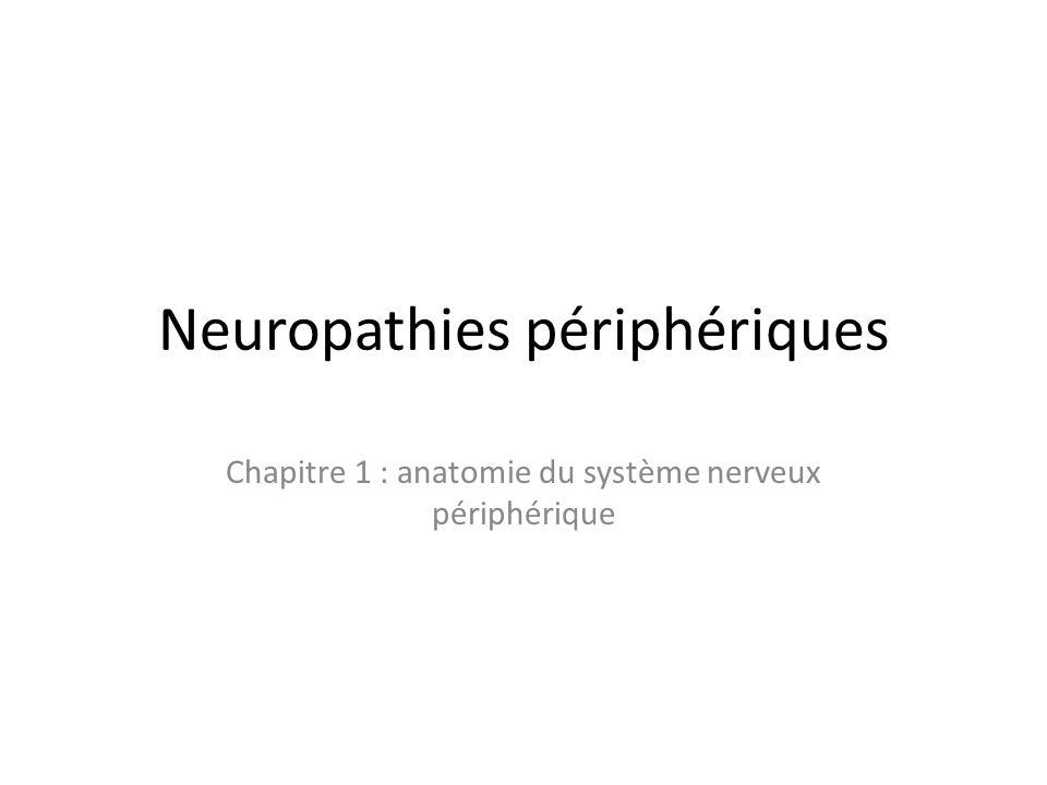 Neuropathies périphériques Chapitre 1 : anatomie du système nerveux périphérique