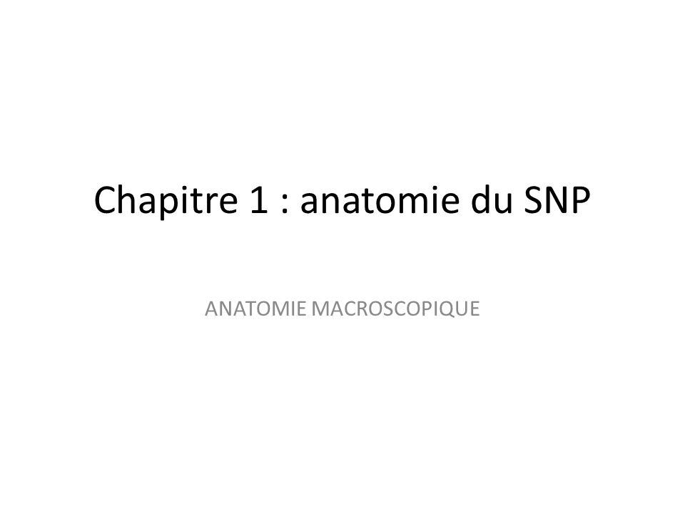 ANATOMIE MACROSCOPIQUE Chapitre 1 : anatomie du SNP