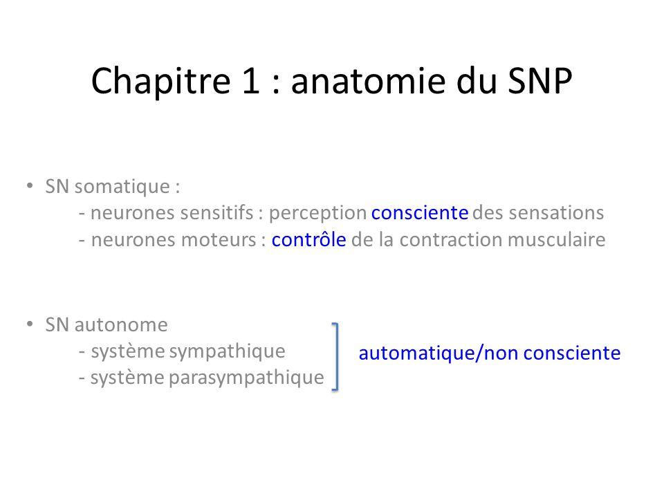 SN somatique : - neurones sensitifs : perception consciente des sensations -neurones moteurs : contrôle de la contraction musculaire SN autonome -système sympathique - système parasympathique automatique/non consciente