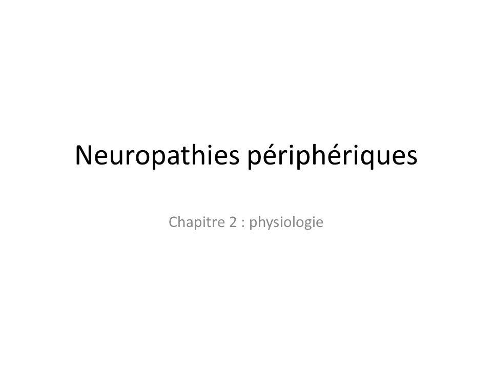 Neuropathies périphériques Chapitre 2 : physiologie