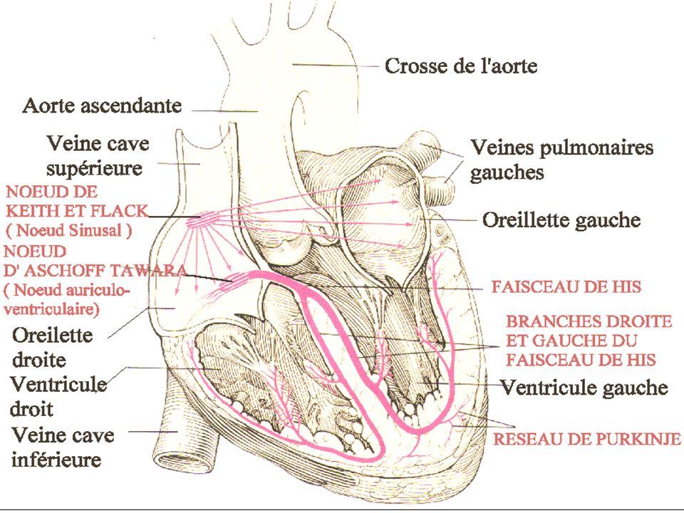 08/01/2008Dr. ABDALLAH - Appareil circulatoire19