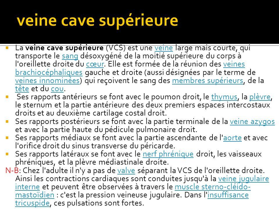  La veine cave supérieure (VCS) est une veine large mais courte, qui transporte le sang désoxygéné de la moitié supérieure du corps à l'oreillette dr