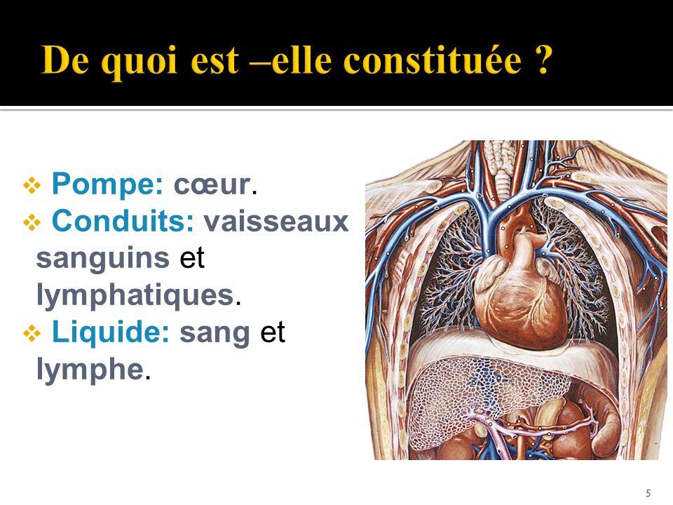  L aorte est la plus grande artère du corps.