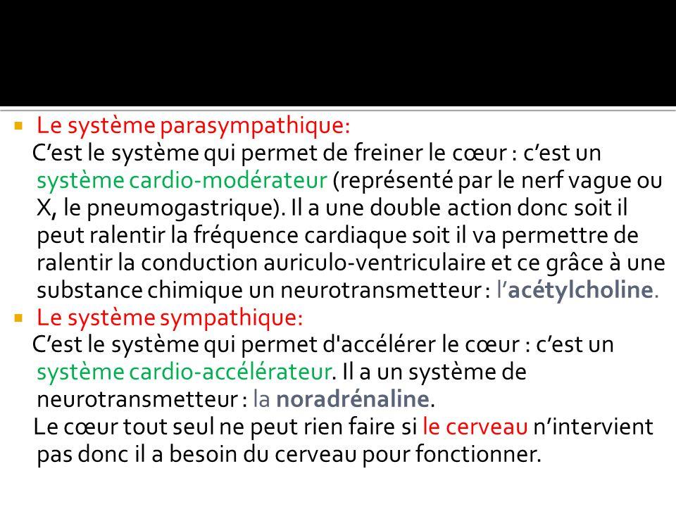  Le système parasympathique: C'est le système qui permet de freiner le cœur : c'est un système cardio-modérateur (représenté par le nerf vague ou X,