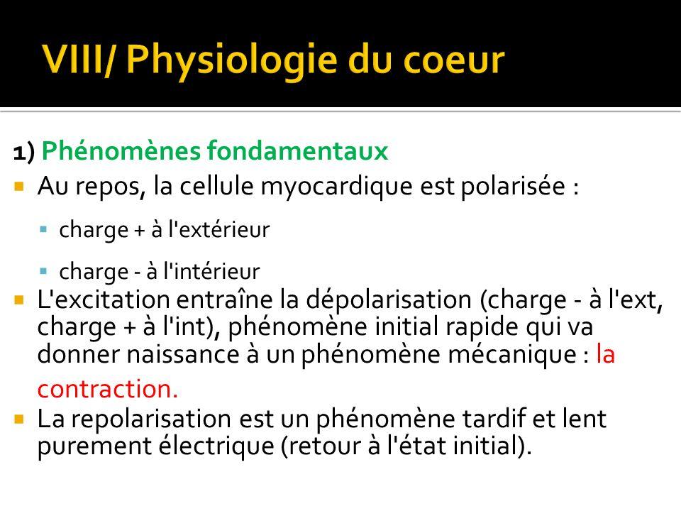 1) Phénomènes fondamentaux  Au repos, la cellule myocardique est polarisée :  charge + à l'extérieur  charge - à l'intérieur  L'excitation entraîn