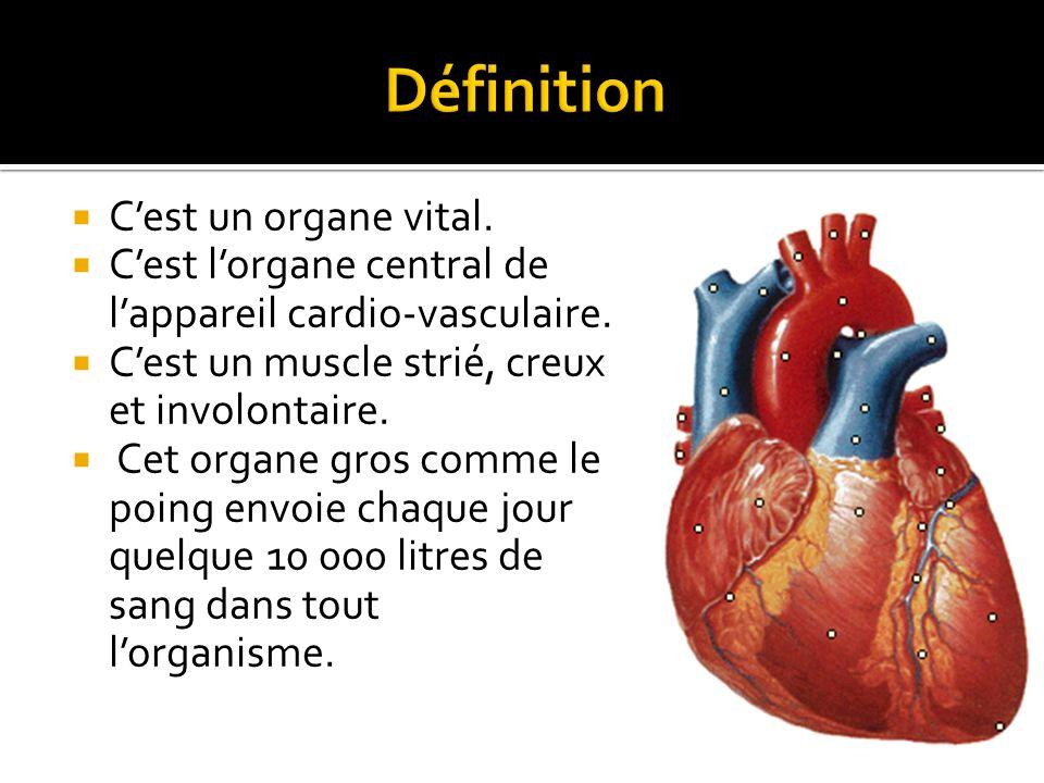  Il est situé dans le thorax occupant le médiastin antérieur.