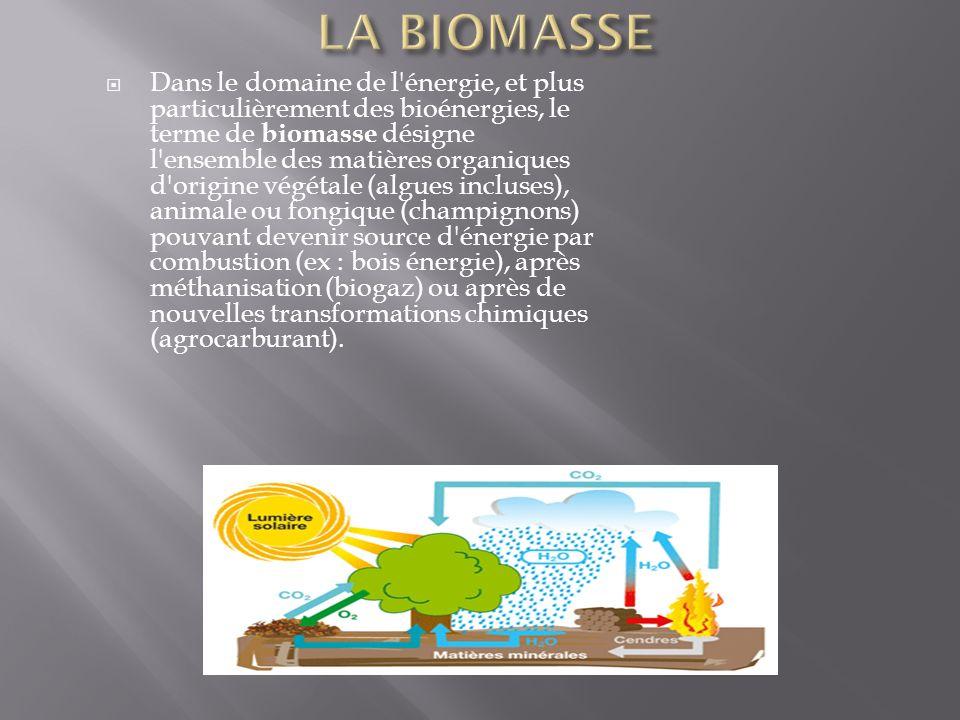  Dans le domaine de l énergie, et plus particulièrement des bioénergies, le terme de biomasse désigne l ensemble des matières organiques d origine végétale (algues incluses), animale ou fongique (champignons) pouvant devenir source d énergie par combustion (ex : bois énergie), après méthanisation (biogaz) ou après de nouvelles transformations chimiques (agrocarburant).