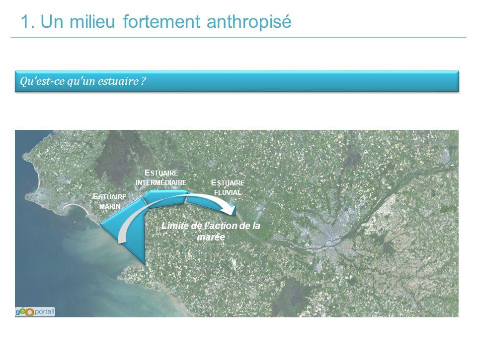 1. Un milieu fortement anthropisé Qu'est-ce qu'un estuaire .