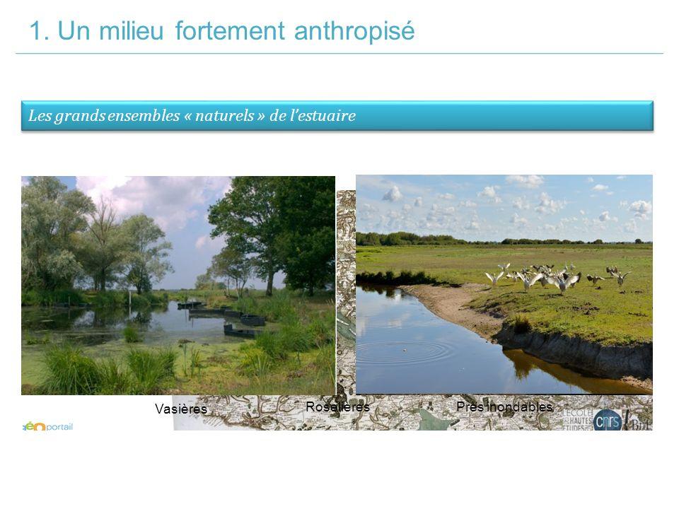 1. Un milieu fortement anthropisé Les grands ensembles « naturels » de l'estuaire Roselières Vasières Près inondables
