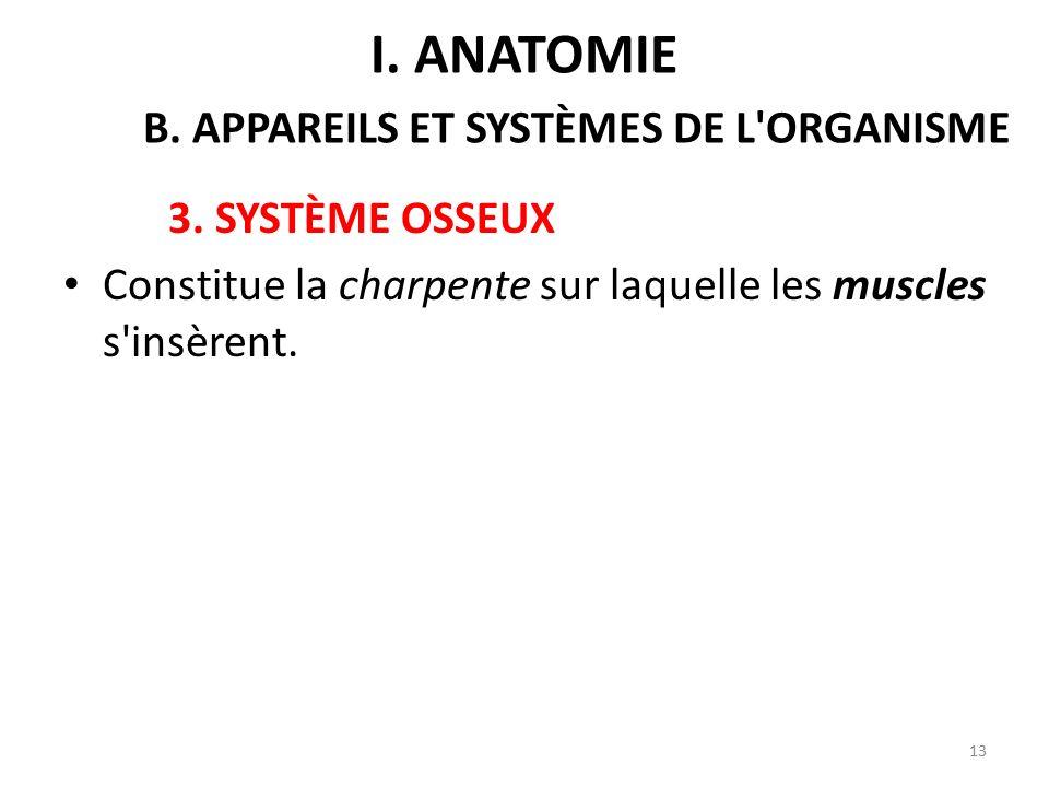 3.SYSTÈME OSSEUX Constitue la charpente sur laquelle les muscles s insèrent.