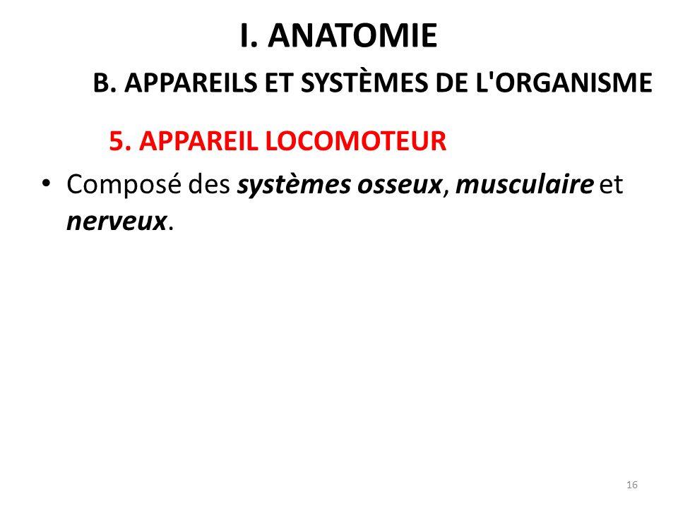 5.APPAREIL LOCOMOTEUR Composé des systèmes osseux, musculaire et nerveux.