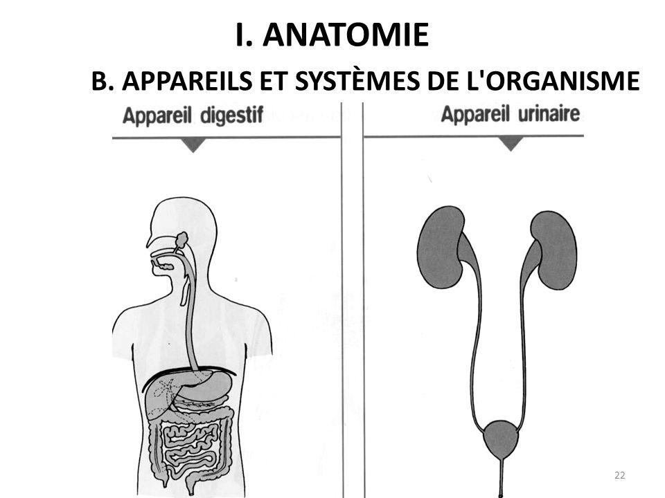 I. ANATOMIE B. APPAREILS ET SYSTÈMES DE L ORGANISME 22