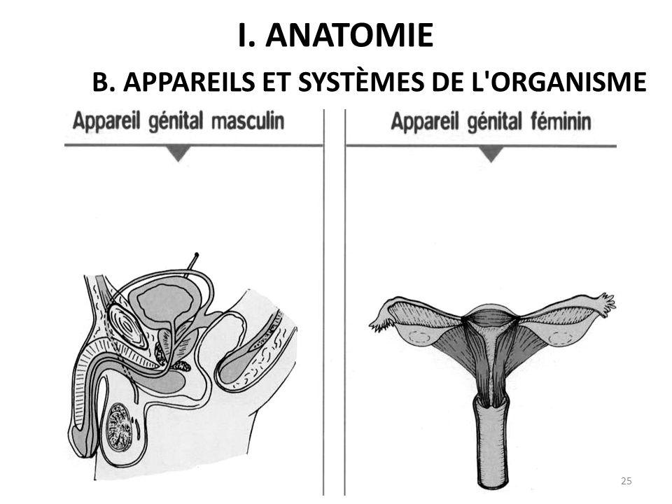 I. ANATOMIE B. APPAREILS ET SYSTÈMES DE L ORGANISME 25