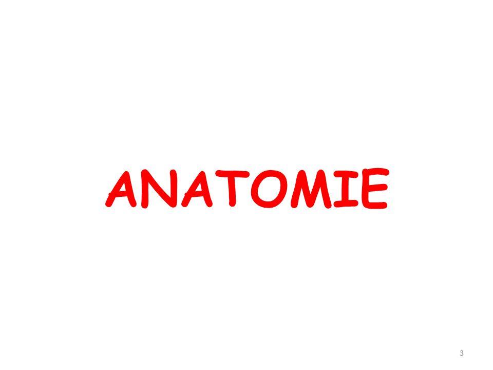14 I. ANATOMIE B. APPAREILS ET SYSTÈMES DE L ORGANISME