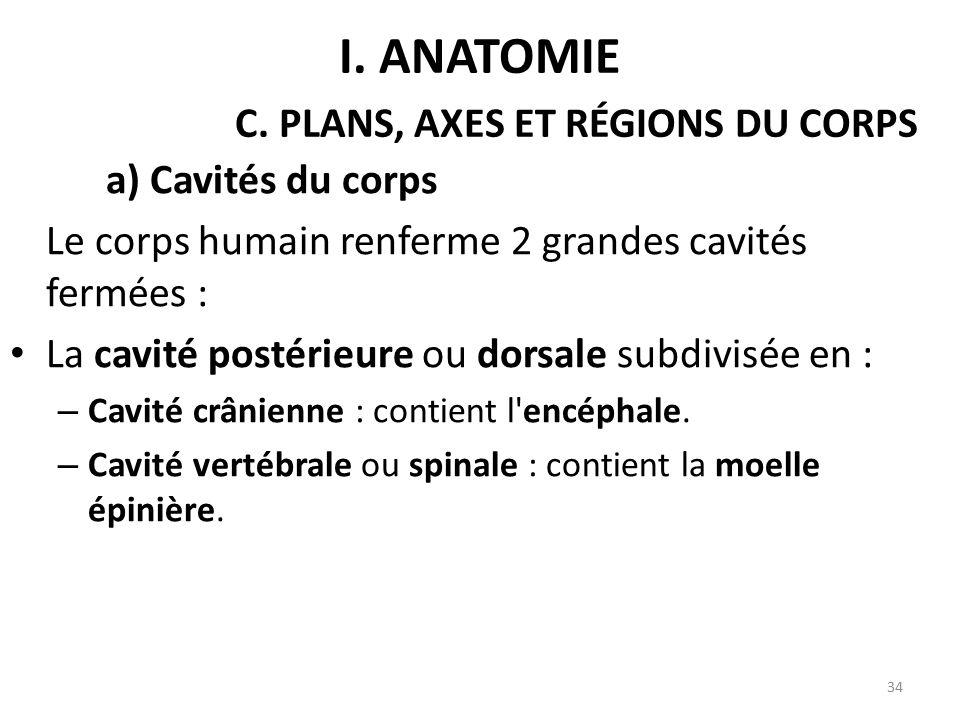 a) Cavités du corps Le corps humain renferme 2 grandes cavités fermées : La cavité postérieure ou dorsale subdivisée en : – Cavité crânienne : contient l encéphale.