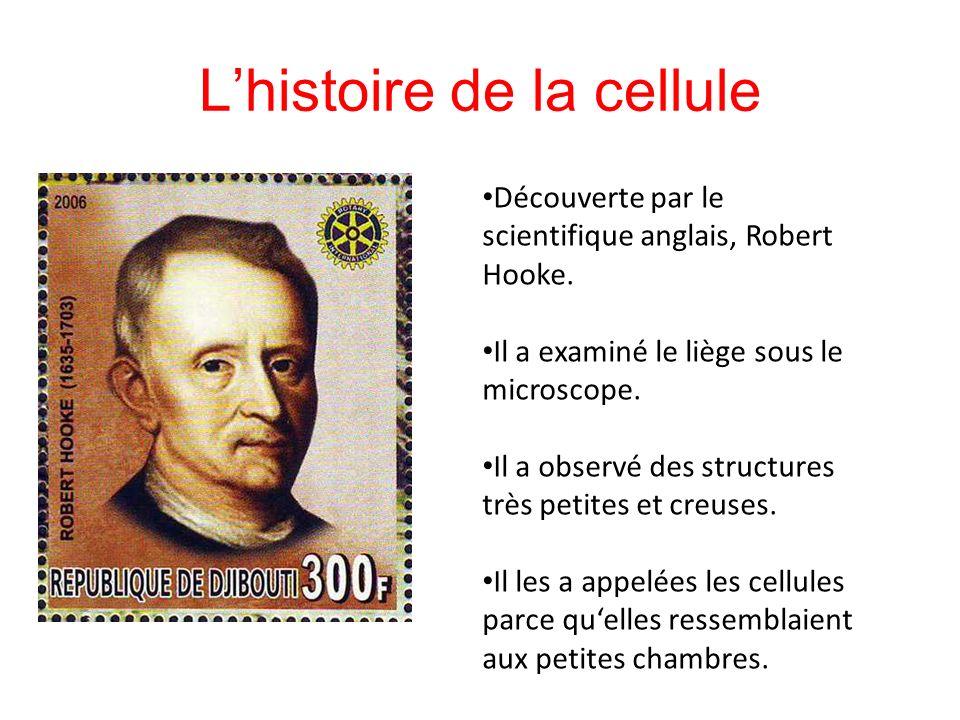 L'histoire de la cellule Découverte par le scientifique anglais, Robert Hooke.
