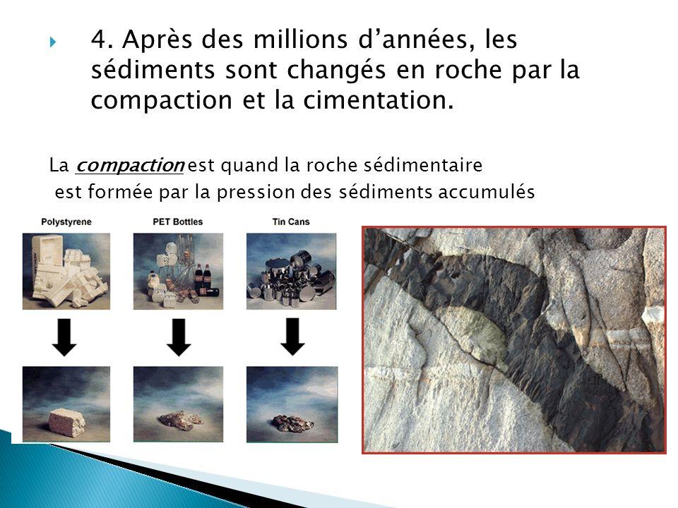  4. Après des millions d'années, les sédiments sont changés en roche par la compaction et la cimentation. La compaction est quand la roche sédimentai