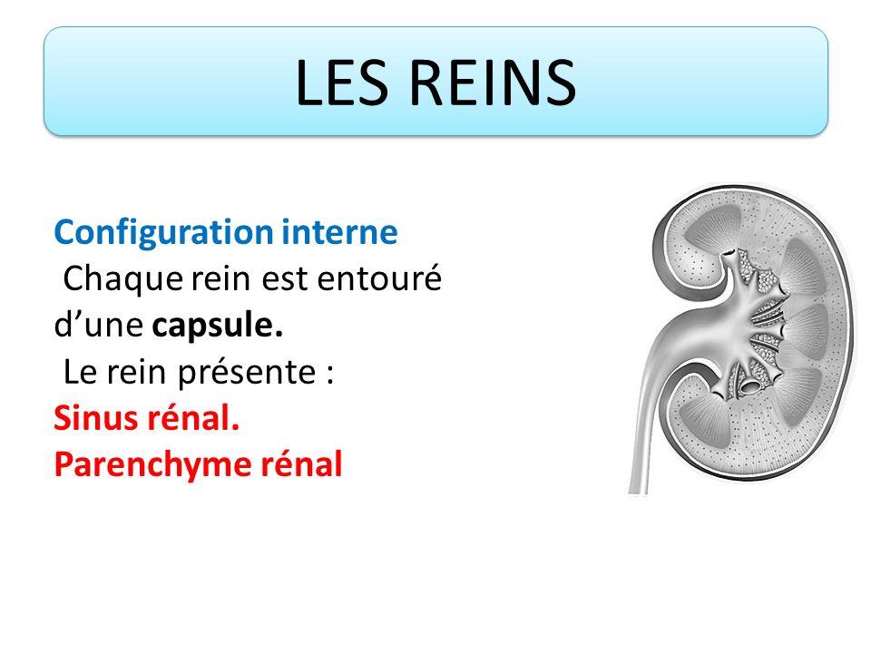 Configuration interne Chaque rein est entouré d'une capsule.