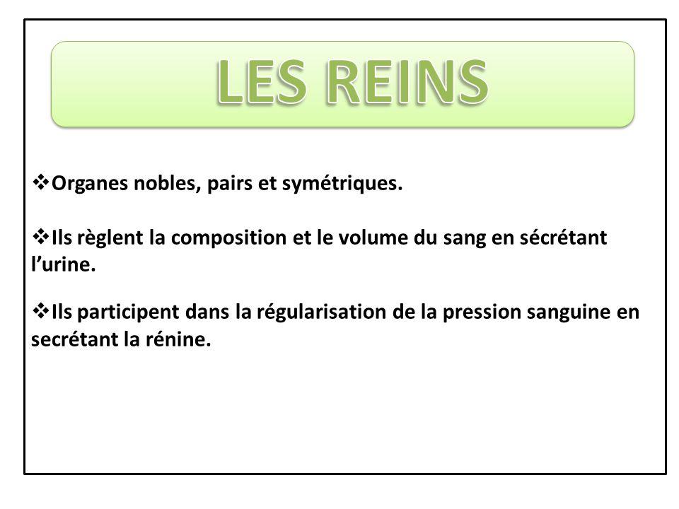  Organes nobles, pairs et symétriques.
