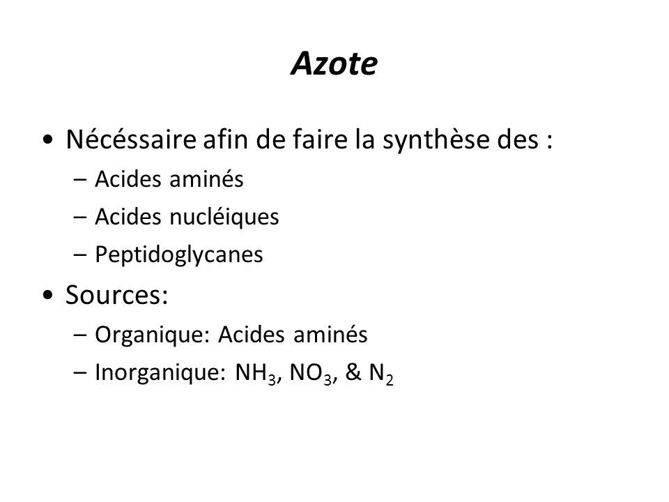 Azote Nécéssaire afin de faire la synthèse des : –Acides aminés –Acides nucléiques –Peptidoglycanes Sources: –Organique: Acides aminés –Inorganique: NH 3, NO 3, & N 2