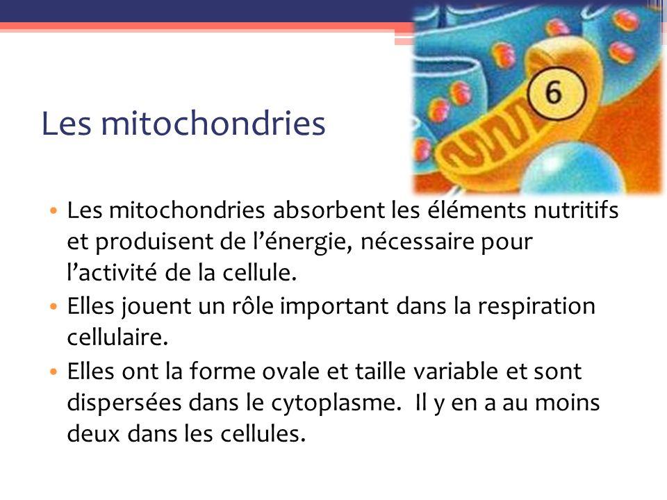 Les mitochondries Les mitochondries absorbent les éléments nutritifs et produisent de l'énergie, nécessaire pour l'activité de la cellule.