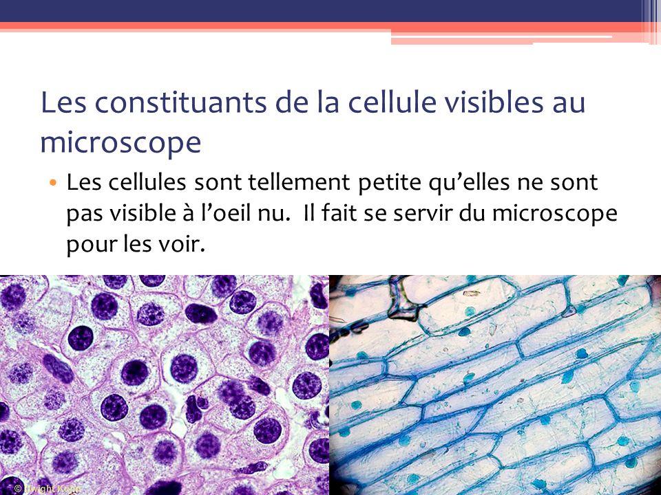 Les constituants de la cellule visibles au microscope Les cellules sont tellement petite qu'elles ne sont pas visible à l'oeil nu.