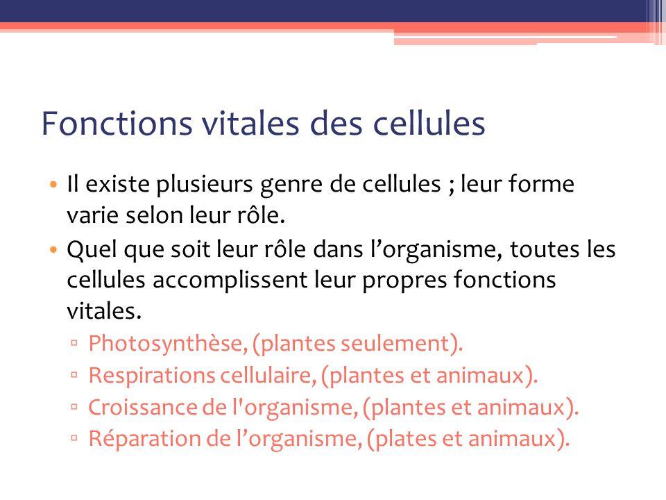 Fonctions vitales des cellules Il existe plusieurs genre de cellules ; leur forme varie selon leur rôle.