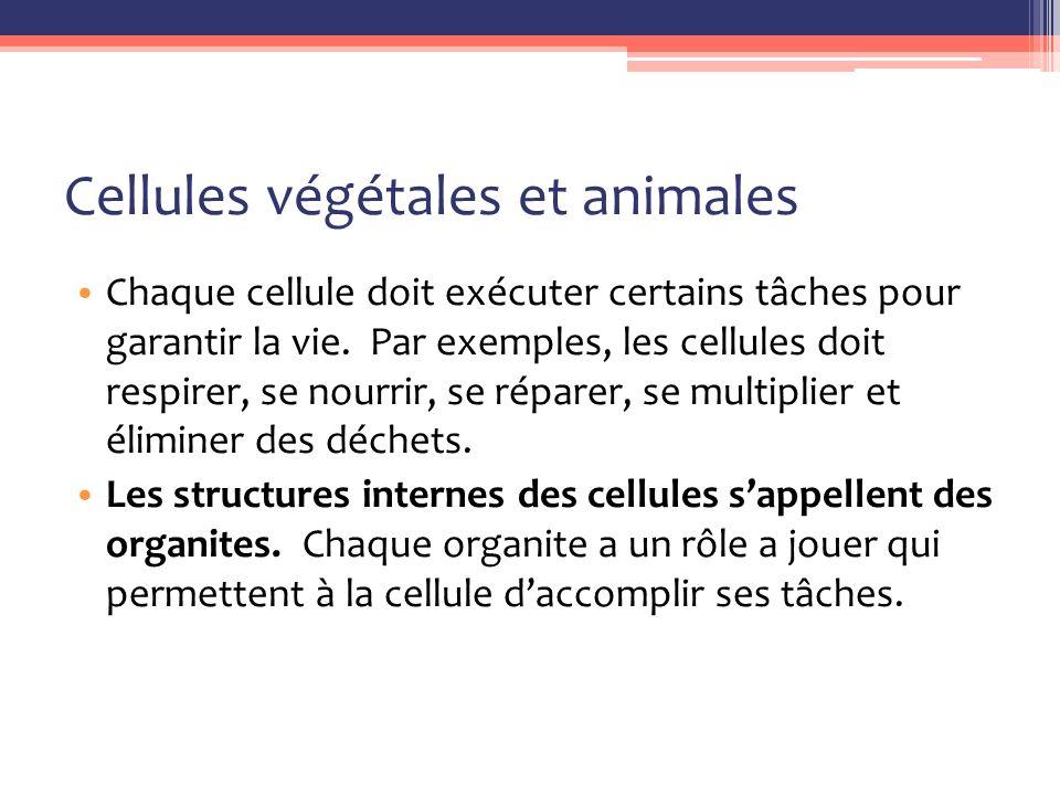 Cellule végétale Toutes le cellules végétales contiennent tous les mêmes organites qu'une cellule animale.