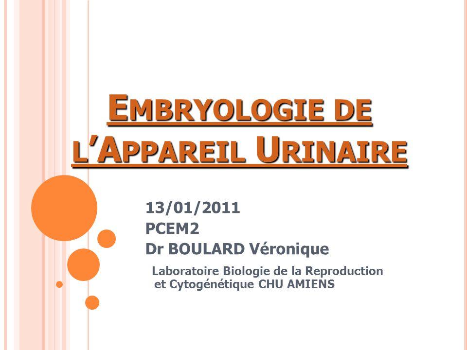 E MBRYOLOGIE DE L 'A PPAREIL U RINAIRE 13/01/2011 PCEM2 Dr BOULARD Véronique Laboratoire Biologie de la Reproduction et Cytogénétique CHU AMIENS