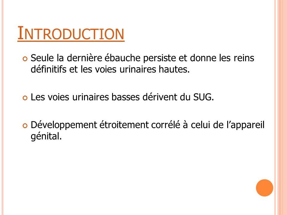 I NTRODUCTION Seule la dernière ébauche persiste et donne les reins définitifs et les voies urinaires hautes. Les voies urinaires basses dérivent du S