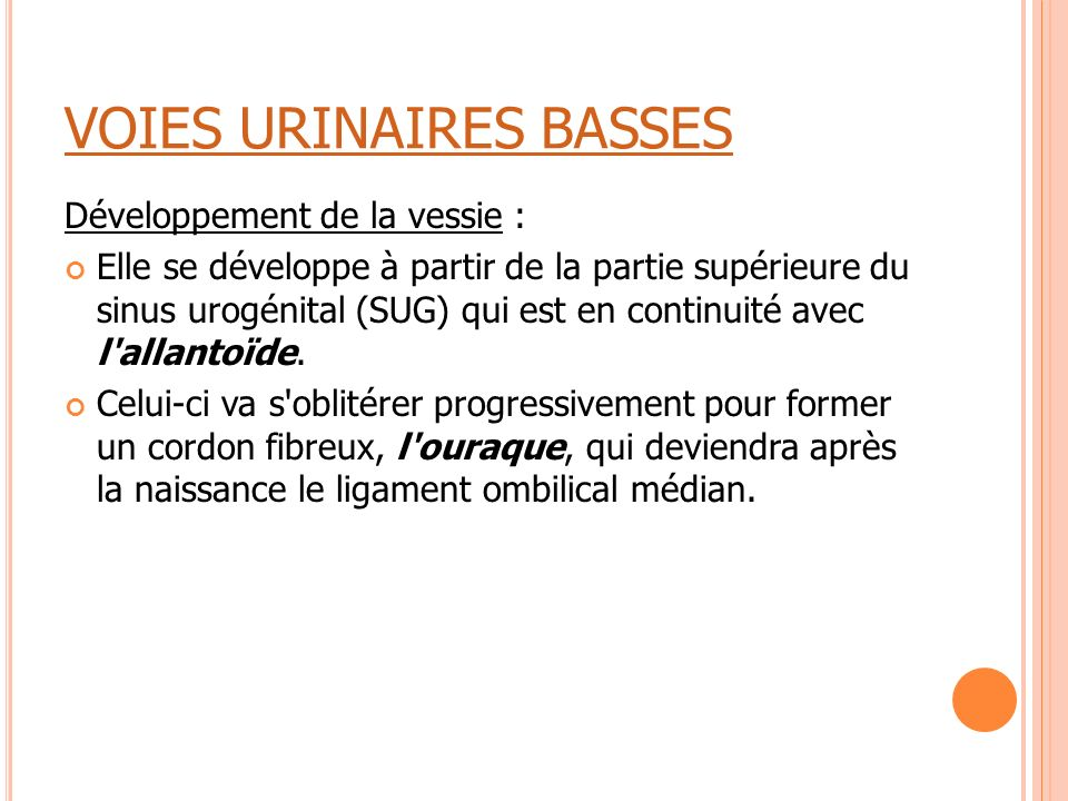 VOIES URINAIRES BASSES Développement de la vessie : Elle se développe à partir de la partie supérieure du sinus urogénital (SUG) qui est en continuité