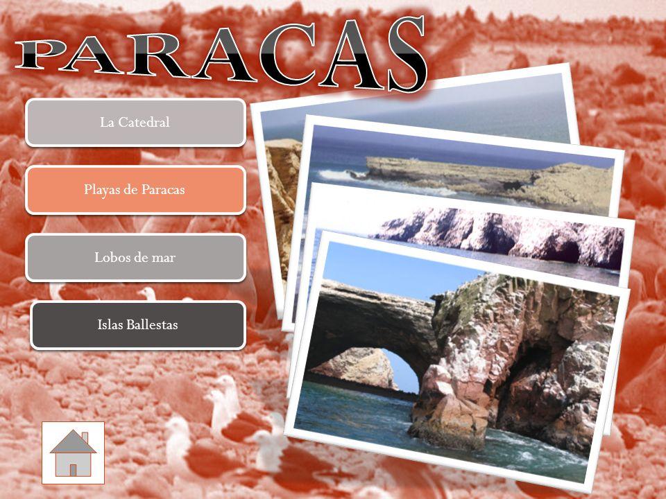 Lobos de mar Lobos de mar Playas de Paracas Playas de Paracas La Catedral La Catedral Islas Ballestas Islas Ballestas